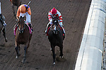 ARCADIA, CA - NOV 04: Beholder #8 (L), ridden by Gary Stevens, wins the the Breeders' Cup Longines Distaff at Santa Anita Park on November 4, 2016 in Arcadia, California. (Photo by Eric Patterson/Eclipse Sportswire/Breeders Cup)