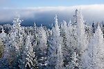 Washington, Chewelah Mountain. Frozen Fog covers the trees of the Colville National Forest in winter.