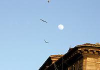 Luna e gabbiani nel centro di Roma, 26 ebbraio 2010..Gulls overfly Rome, 26 february 2010. On background the Moon is seen..UPDATE IMAGES PRESS/Riccardo De Luca