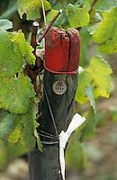 Europe/France/89/Yonne/Chablis: détail piquet du vignoble AOC Chablis