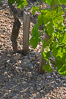 Detail of the sandy and Gravely soil at Chateau Cos d'Estournel Saint Estephe Medoc Bordeaux Gironde Aquitaine France