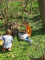 Jungen, Kinder ernten Scharbockskraut, Scharbocks-Kraut, Kräuter im Frühjahr sammeln für Kräutersuppe und Wildgemüse-Salat, Ficaria verna, Ranunculus ficaria