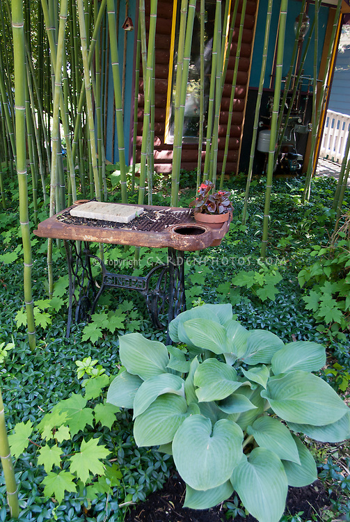 Flea market finds in the garden, singer Sewing machine repurposed as container and ornament in shade with hosta, bamboos