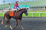 Less Than Perfect(7) with Jockey Taylor B. Rice aboard after completing the Summer Stakes at Woodbine Race Course in Toronto, Canada on September 13, 2014 with Jockey Patrick Husbands aboard.