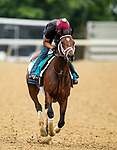June 4, 2021:  TRombauer gallops in preparation for the Belmont Stakes at Belmont Park in Elmont, New York on June 4, 2021. Evers/Eclipse Sportswire/CSM