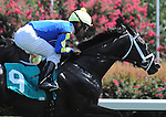 August 02 2015: Pointe Class, ridden by Abel Castellano, Jr., runs in the Maiden Special Weight on Haskell Day at Monmouth Park in Oceanport, NJ. Sophie Shore/ESW/CSM