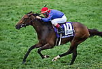 May 5, 2012. Hungry Island  and John Velazquez win the Churchill Distaff Turf Mile Stakes at Churchill Downs in Louisville, KY