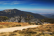 Image Ref: HC141<br /> Location: Mt Stirling<br /> Date: 22 March, 2015