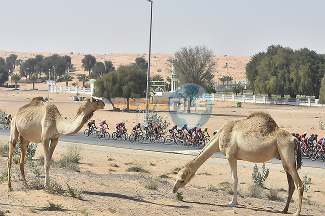 The peloton in action during Stage 3 The Silicon Oasis Stage of the Dubai Tour 2018 the Dubai Tour's 5th edition, running 180km from Skydive Dubai to Fujairah, Dubai, United Arab Emirates. 7th February 2018.<br /> Picture: LaPresse/Fabio Ferrari | Cyclefile<br /> <br /> <br /> All photos usage must carry mandatory copyright credit (© Cyclefile | LaPresse/Fabio Ferrari)