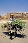 EGY, Aegypten, Theben-West: Mann transportiert Zuckerrohr auf einem Esel | EGY, Egypt, Theben-West: man with sugar cane and donkey