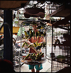August 2000. Jakarta, Indonesia. Cockatoos are for sale on Jalan Balito in Jakarta.  Since Suhartos downfall the endangered animal business has proliferated because of government corruption and inability to police the industry