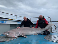 BNPS.co.uk (01202 558833)<br /> Pic: Kevin McKie/BNPS<br /> <br /> Pictured: Brian Harrison and Tommy Dunford with a catch.<br /> <br /> A British fishing party has caught a record number of a rarely seen species of shark that pre-date dinosaurs.<br /> <br /> The group reeled in 14 monster sixgill sharks in one day in a secret area of the north Atlantic dubbed Jurassic Park because it is inhabited by the pre-historic fish.<br /> <br /> The sharks weighed up to 450lbs (32st) each and it took an average of 40 minutes to reel in each one.<br /> <br /> The sixgill shark - Hexanchus griseus in Latin - spends much of its time in deep water and as a result has little interaction with humans, with only one reported attack in 500 years.
