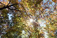 Arnold Arboretum, autumn, Boston, MA fall