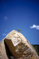A small tree grows out of the top of a huge boulder of Boulder, Colorado, life growing out of adversity, perserverance. Boulder Colorado USA Peak to Peak highway.