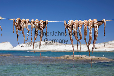 Greece, South Aegean, Cyclades, Milos island, Mandrakia: Drying Octopus | Griechenland, Suedliche Aegaeis, Kykladen, Insel Milos, Mandrakia: Tintenfisch zum Trocknen aufgehaengt