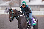 October 28, 2015:  Cage Fighter, trained by James L. Lawrence and owned by Matthew Schera, exercises in preparation for the Longines Breeders' Cup Turf at Keeneland Race Track in Lexington, Kentucky on October 28, 2015. Jon Durr/ESW/CSM