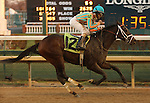 Conquest Titan with Shaun Bridgmohan wins the 10th at Churchill Downs, a one mile allowance. Conquest Titan ran in the Breeders' Cup Juvenile and was a stakes winner at Woodbine.<br /> November 30, 2013.