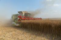 22-7-2021 Harvesting oilseed rape <br /> ©Tim Scrivener Photographer 07850 303986<br />      ....Covering Agriculture In The UK....