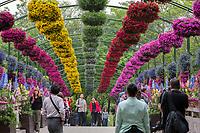 Yangzhou, Jiangsu, China.  Hanging Baskets of Flowers above Walkway, Slender West Lake Park.