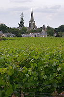 Vineyard. The Savennieres church. Savennieres, Anjou, Loire, France