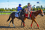 TORONT,CANADA-SEP 14: Lucullan is post parading before the Woodbine Mile at Woodbine Race Track on September 14,2019 in Toronto,Ontario,Canada. Kaz Ishida/Eclipse Sportswire/CSM