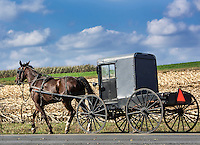 Amish buggy, Leacock, Lancaster County, Pennsylvania, USA