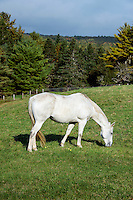 Horse grazing on a hilly pasture