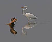 TURTLE MEETS EGRET<br />A turtle and an egret cross paths at Swepco Lake, two miles west of Gentry, in September.<br />(Courtesy photo/Terry Stanfill)