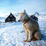 Chien huskie dans le villafe d'Ammasalik. on dénombre plus de 1000 chiens dans ce village. Groënland (côte Est). Région d'Angmagssalik (Ammasalik ou Tassilaq). Greenland (East coast). Husky dog in the village of ammasalik. tres is more than 1000 dogs in this village