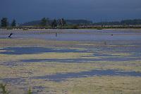 Feuchtgebiet, Sumpf, Überschwemmungsfläche, Feuchtbiotop, Wasserfläche, Tümpel, flood area, wetlands, wetland. Deutschland, Mecklenburg-Vorpommern, Peene, Anklam