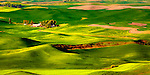 Steptoe Butte stands tall above the Palouse in Washington State.  Steptoe Butte is a quartzite island jutting up from sediment left by the ice age Missoula flood that formed the Palouse.   Cow Parsnip often flanks bordering roads in spring.