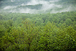 Fog rising in Sugarlands Valley, Great Smoky Mountains National Park, TN, USA