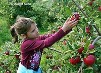 AT05-500z  Picking Apples, PRA