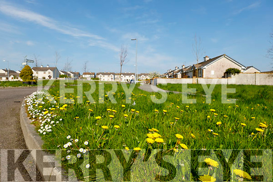 Picture's of overgrown grass at the entrance to Ashgrove Estate and adjoining Liosarda Estate in Listowel.