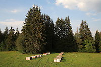 An apiary is set up near the fir forests of the Jura plateaus.