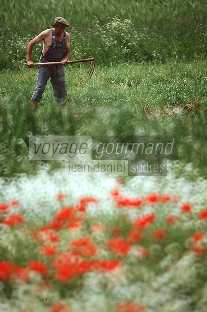 Europe/France/Midi-Pyrénées/46/Lot/Vallée de l'Alzou/Causse de Gramat/Env de Gramat: Travaux des champs au printemps Agriculteur<br /> PHOTO D'ARCHIVES // ARCHIVAL IMAGES<br /> FRANCE 1980