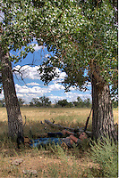 Two men resting in the shade of cottonwood trees during a mid-day lull in a dove hunt.
