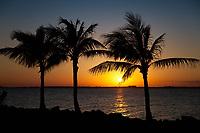 Palm Trees, Sunset, Boca Chica Key, Florida Keys, FL, America, USA.