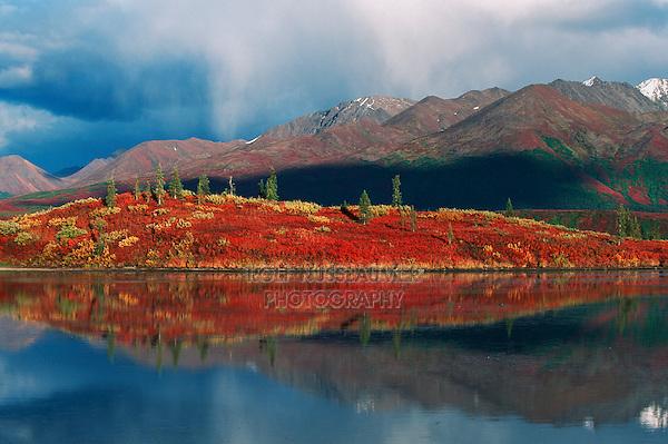 Indian Summer fall colors, Tangle Lake, Alaska, USA