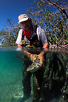 Shark researcher with juvenile Lemon shark, Negaprion brevirostris, in mangroves, split view, Bimini, Bahamas, Caribbean, Atlantic Ocean