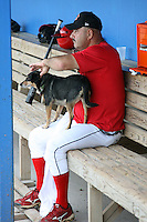 """July 3, 2009:  Manager Mark DeJohn of the Batavia Muckdogs after batting practice with """"Haley"""" (Stadium Grounds Director dog) before a game at Dwyer Stadium in Batavia, NY.  The Muckdogs are the NY-Penn League Short-Season Class-A affiliate of the St. Louis Cardinals.  Photo By Mike Janes/Four Seam Images"""