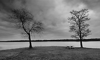 Trees that have dropped their leaves for winter are silhouetted against a story sky in black and white photo<br />