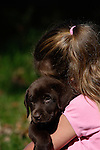 12 year old girl holds a chocolate Labrador retriever puppy (AKC) in her arms.  Birchwood, WI