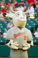 """Zooperstars character """"Cow Ripken Jr."""" entertains the fans between innings of the South Atlantic League game between the Kannapolis Intimidators and the Lakewood BlueClaws at FirstEnergy Park on August 8, 2012 in Lakewood, New Jersey.  The BlueClaws defeated the Intimidators 5-0.  (Brian Westerholt/Four Seam Images)"""