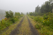 The Presidential Recreational Rail Trail, east of the Pinkham B Road (Dolly Copp Road) crossing in Randolph, New Hampshire on a foggy summer morning. This 18 mile long multi use trail utilizes the old railroad bed of the Boston & Maine's Berlin Branch. Opened in the mid-1800s, the Berlin Branch of the railroad was abandoned in the 1990s.