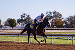 November 3, 2020: Tiz The Law, trained by trainer Barclay Tagg, exercises in preparation for the Breeders' Cup Classic at Keeneland Racetrack in Lexington, Kentucky on November 3, 2020. Gabriella Audi/Eclipse Sportswire/Breeder's Cup/CSM