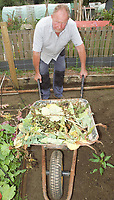 Pictured: Allotment owner David Legge with vegetables that have been poisoned.<br /> Re: Allotment gardeners have vowed to unearth a deadly plot that has poisoned rows of cherished vegetable plants in Taff's Well, near Cardiff, Wales, UK.<br /> Allotment-holders noticed the leaves and stems of their summer vegetables wilting and discolouring. <br /> Rows of runner beans, cabbages sweet corn, peas and carrots were devastated. by a mystery attacker suspected to be using liquid poison in a large water pistol.<br /> Now allotment holders are calling for witnesses to expose the serial plant killer who has struck 5 different vegetable plots over 2 growing seasons.