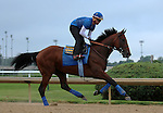 May 31, 2015 American Pharoah (ridden by Georgie Alvarez) galloped on a rainy, overcast day at Churchill Downs during a special workout period for Belmont Stakes horses.  He flies to New York on June 2.  ©Mary M. Meek/ESW/CSM