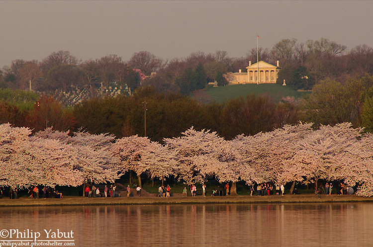 2013 National Cherry Blossom Festival -- Arlington House and Arlington National Cemetery.