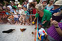 04/08/19<br /> <br /> Owners egg-on their hens to cross the line first by shaking food in tins,<br /> <br /> Hundreds of spectators watch as competitors race their hens at the World Championship Hen Racing on a purpose-built track outside the Barley Mow pub in Bonsall, in the Derbyshire Peak District.<br />  <br /> All Rights Reserved, F Stop Press Ltd +44 (0)7765 242650 www.fstoppress.com rod@fstoppress.com